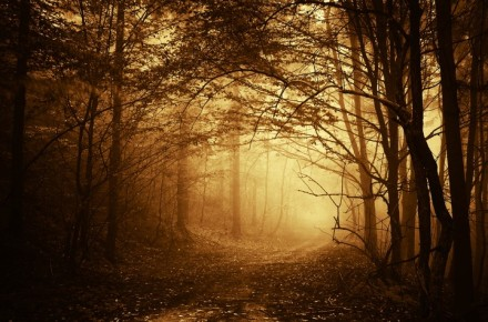 forest-fog-trees-branches-road-path-autumn