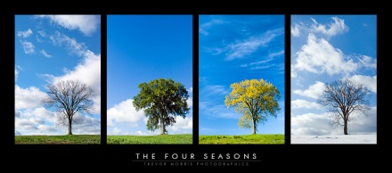 The Four Seasons